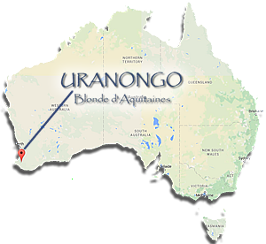 australia uranongo location